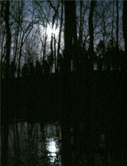 Zombie tom 2005