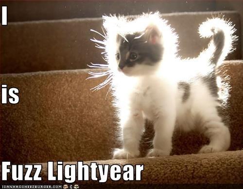 File:Art-beautiful-cat-cheezburger-Favim.com-518086.jpg