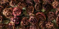 The Girl in the Rosebush