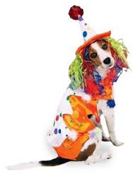Clown dog 6