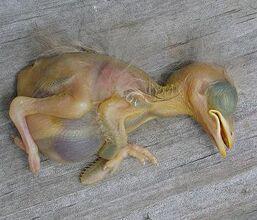 Deadbabybird