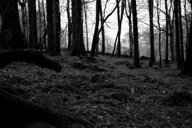 File:Woods2-0.jpg