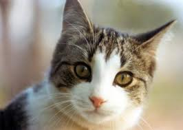 File:Kittycat.jpg
