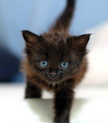 File:Black-kitten-2.jpg