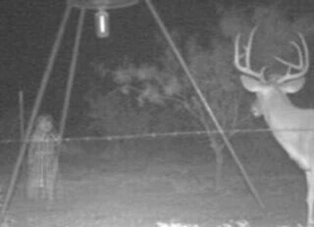 File:Ghost-deer-cam-3.jpg