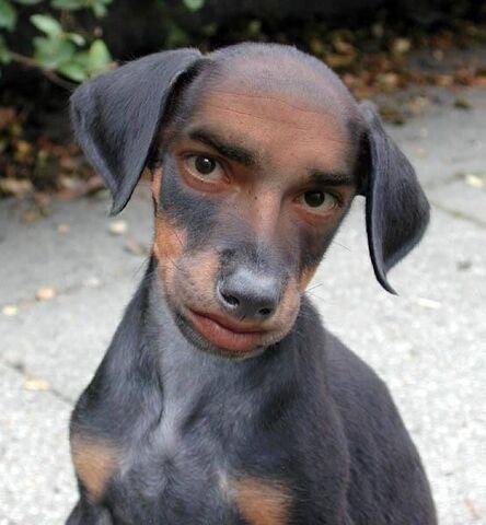 File:Free Dog.jpg