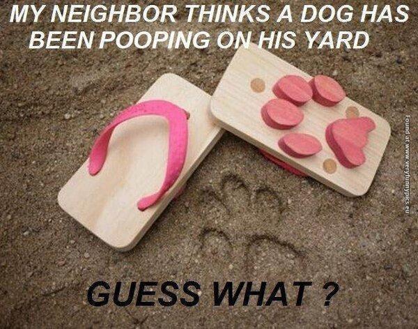 File:Yard pooping.jpg