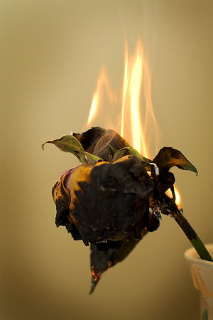 File:Burnt flowers fallen by mci.jpg