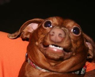 File:Cute doggy.jpg