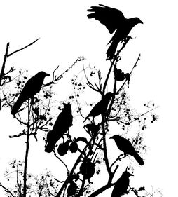 Crows-in-tree-e1343676636120