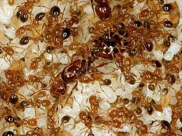 File:Antcolony.jpg