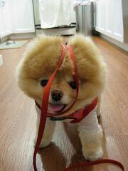 Khloe-Kardashian-Boo-the-Dog-Facebook-10261023
