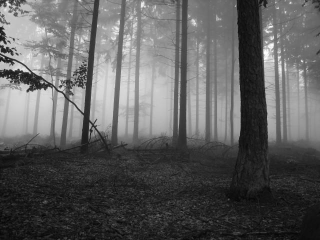 File:Foggy forest 1 640.jpg