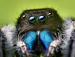 File:Spider Eyes.jpg