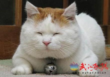 File:Cats4.jpg