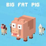 Bigfat pig