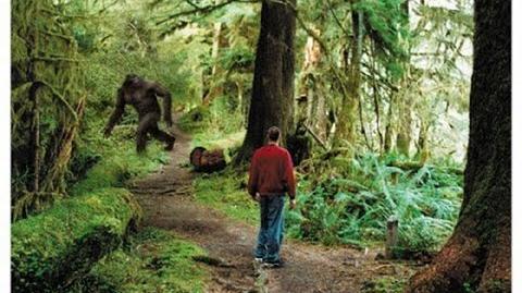Sasquatch Falls On Biologists' Tent - An Interview With John Mionczynski