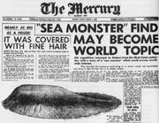 The Mercury Tasmanian Globster