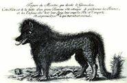 Wereorwolf