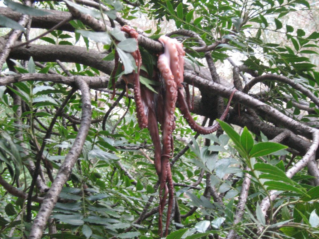 Pacific Northwest Tree Octopus | Cryptid Wiki | FANDOM powered by ...