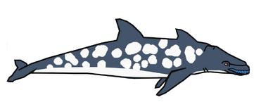 Rhinoceros dolphinn