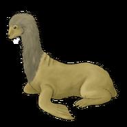 Male longnecked sea lion