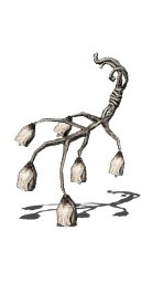 File:Witchtree Bellvine.png