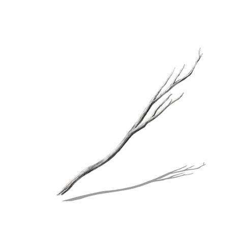 File:Young White Branch.png