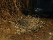 Dyna & Tillo's Nest