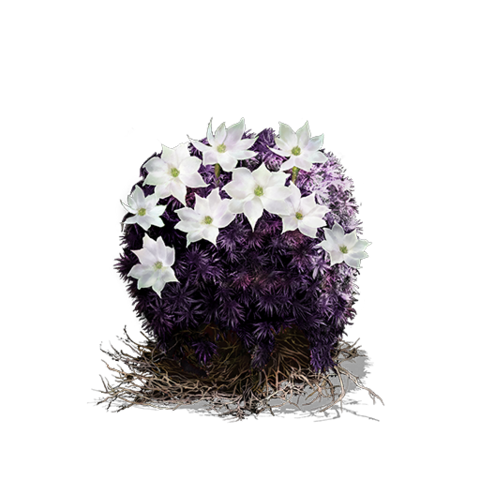 File:Blooming Purple Moss Clump (DSIII).png