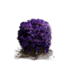 Purple Moss Clump (DSIII)