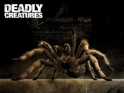 Deadly creatures tarantula-1152x864