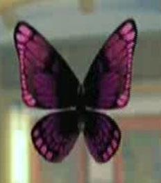 File:DOAXBVButterflyHairClip(Red).jpg
