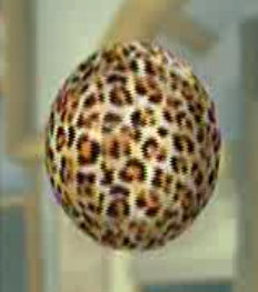 File:DOAXBVLeopardPrintBall.jpg
