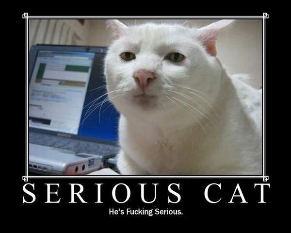 File:Serious cat.jpg
