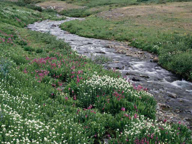 File:Creek.jpg