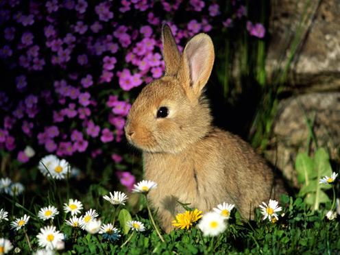 File:Rabbit-cute.jpg
