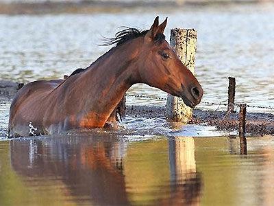 File:Horse 16isbq6-16isbqt.jpg