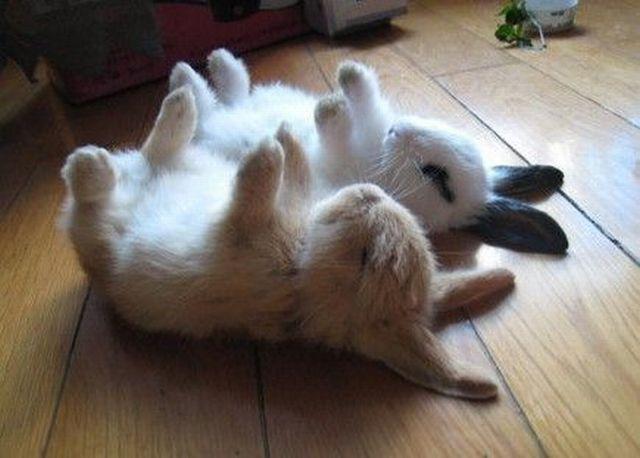 File:Cute animals 25.jpg