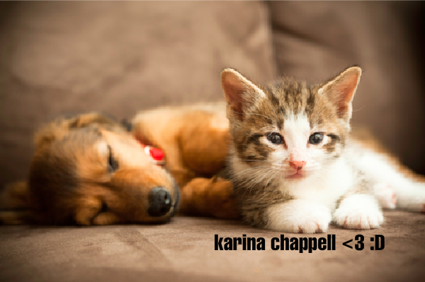File:Puppy and kitty!!!.png