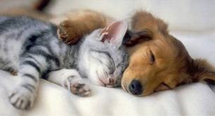 File:Puppies and Kittens.jpg