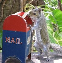 Mailbox Squirrel.jpg