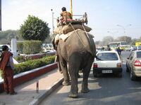 Elephants on the road.jpg