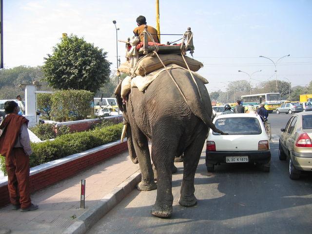 Datei:Elephants on the road.jpg