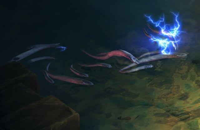 File:Eels2.jpg