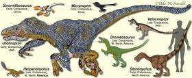 DromeosaurModels