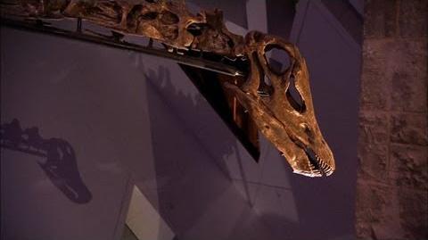 Where'd We Put That Dinosaur?