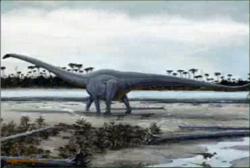 Is Seismosaurus a valid name or should it be regarded as a genus ...