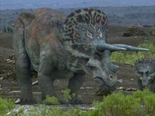 1x1 Triceratops