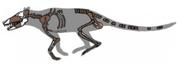 220px-Pakicetus fossil